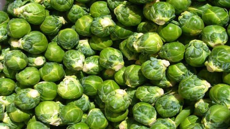 can you freeze brussel sprouts