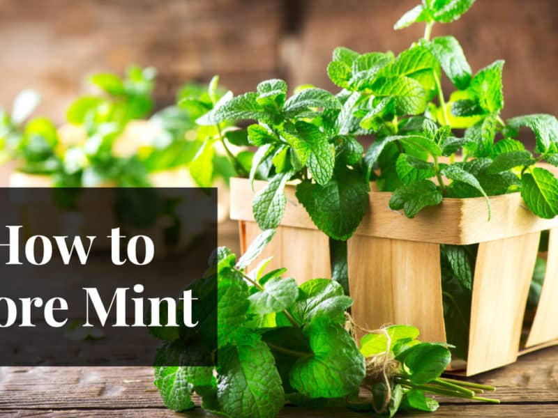 How to Store Mint