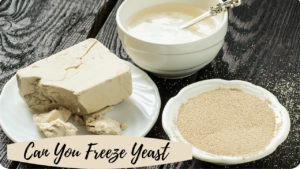 can you freeze yeast